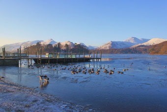 A dog enjoying a cold morning on Derwentwater