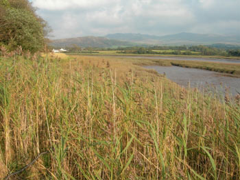 View of Fells from River Esk, Ravenglass, Lake District
