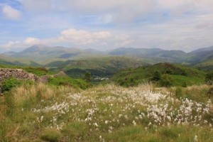 Wild flowers on Muncaster Fell