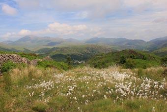 Wild flowers on Muncaster Fell