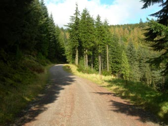 Forest Roads for most of the walk at Whinlatter